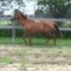 Horse Webcams