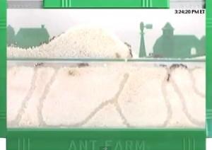 Ant Webcams